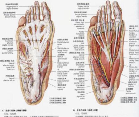 足底腱(筋)膜炎